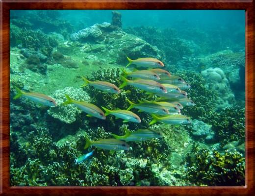 012 MORE SCUBA DIVING Racha Yai Islands Thailand 1